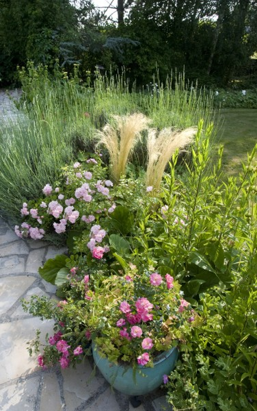 Les potées de rosiers et vivaces son très décoratives au jardin sur la terrasse