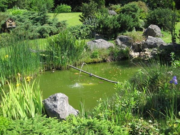 Le bassin dans le jardin - Roses Guillot