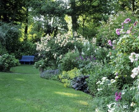 conseils de jardinage, associer les rosiers