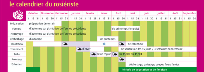 Calendrier rosiers roses guillot for Calendrier entretien jardin