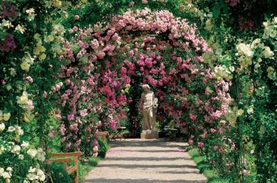 Les rosiers grimpants ou lianes pour un effet toujours spectaculaire