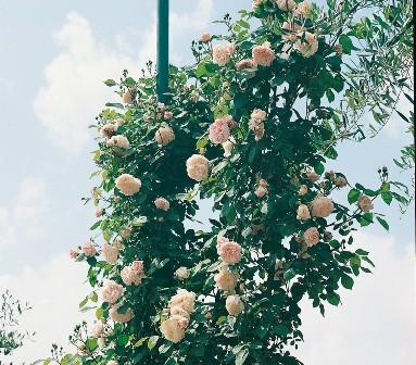 Faire grimper un rosier sur une tonnelle roses guillot - Comment fixer un rosier grimpant au mur ...
