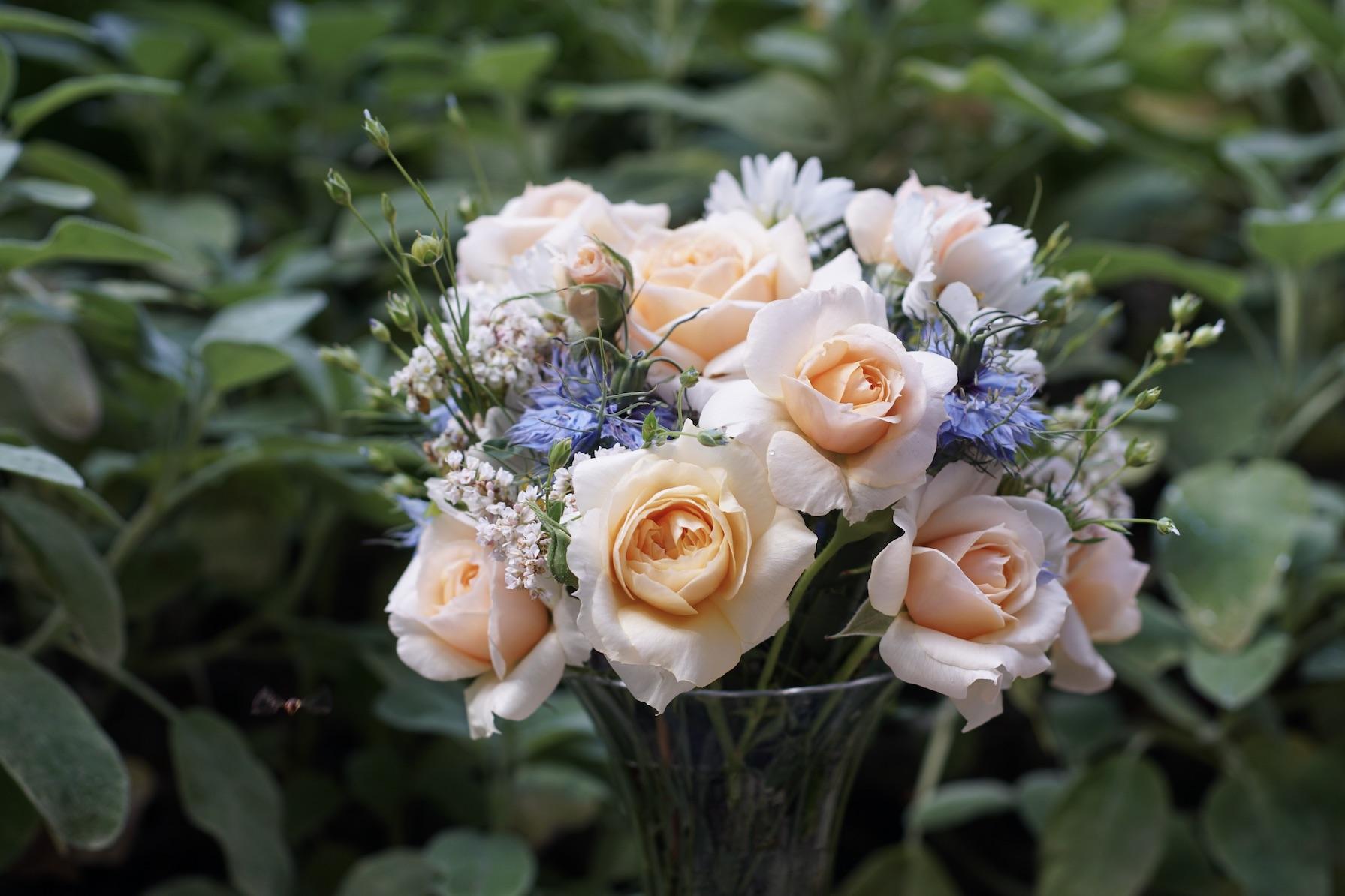 Rosier buisson Générosa® - Xavier de Fraissinette® - Roses Guillot®