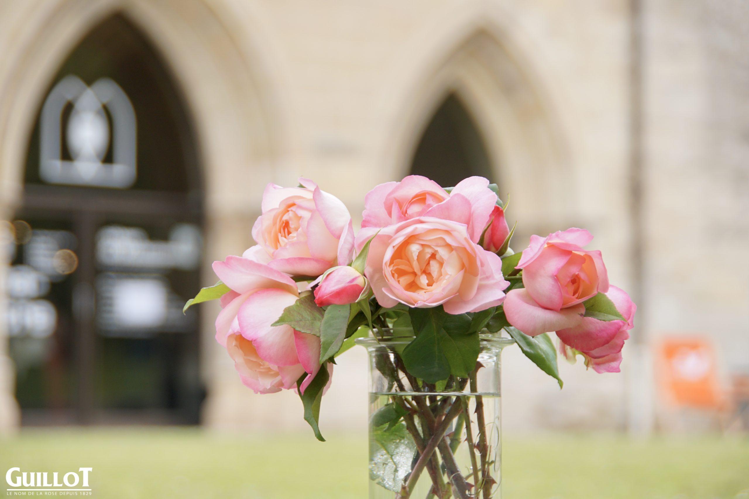 Abbaye de Maubuisson, Rosier Générosa® - Roses Guillot®