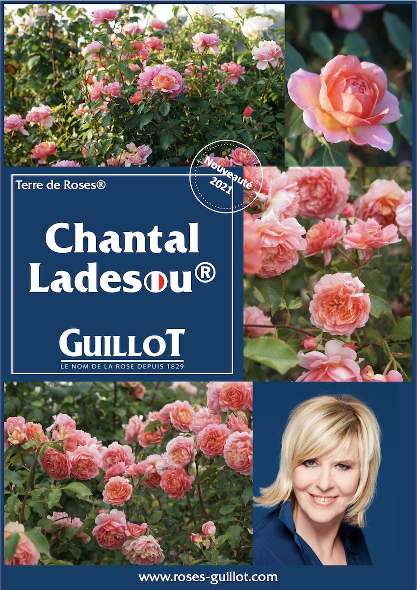 Chantal Ladesou, Terre de Roses® - Roses Guillot®