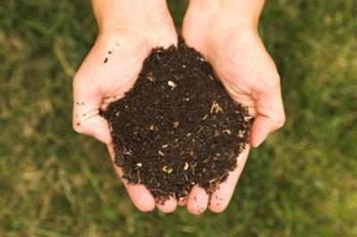 Compost, engrais naturel rosiers