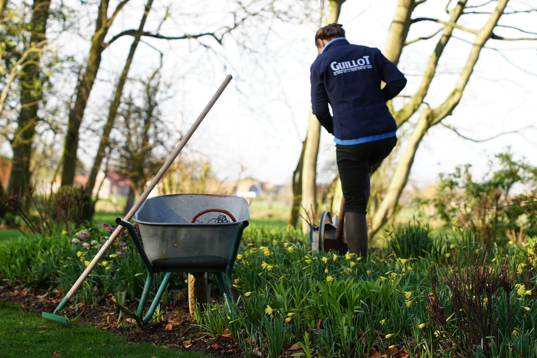 Plantation de rosiers racines nues jusqu'en mars-avril - Roses Guillot®