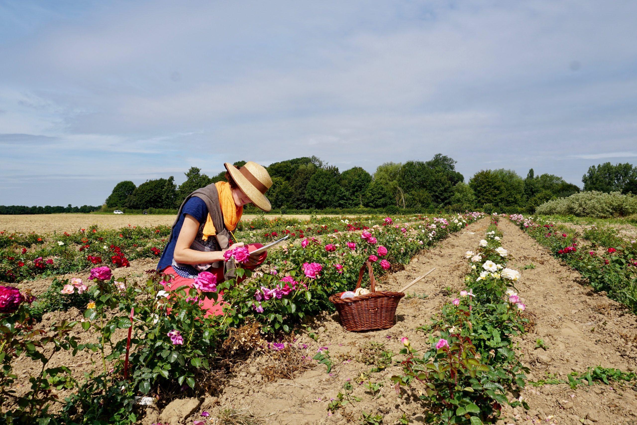 En champ d'essais, notation des rosiers - ©Roses Guillot®
