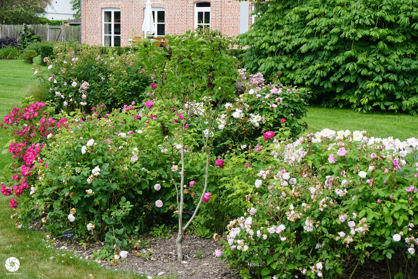 Jardin de Roses Guillot®