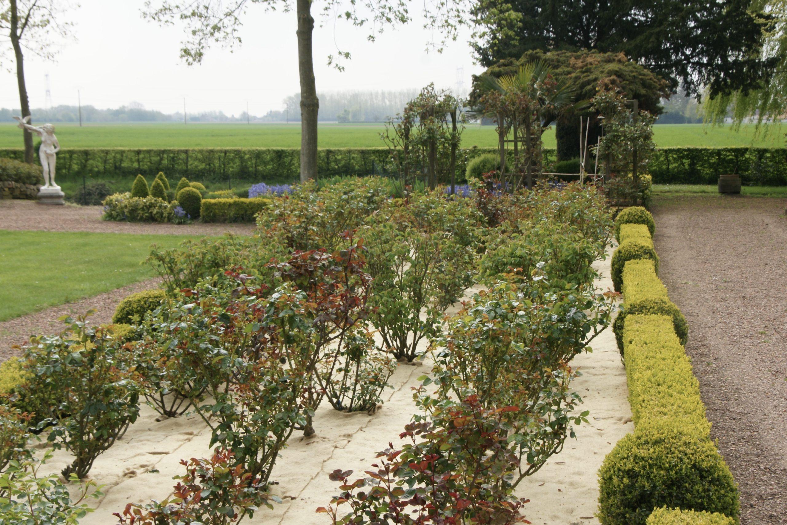 Jardin juste avant les roses chez Roses Guillot®