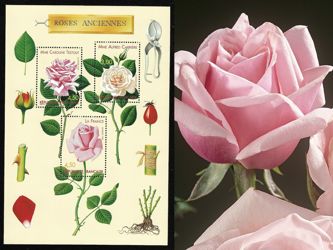 Timbres postes de 1999 représentant La France® et du greffage - Roses Guillot®