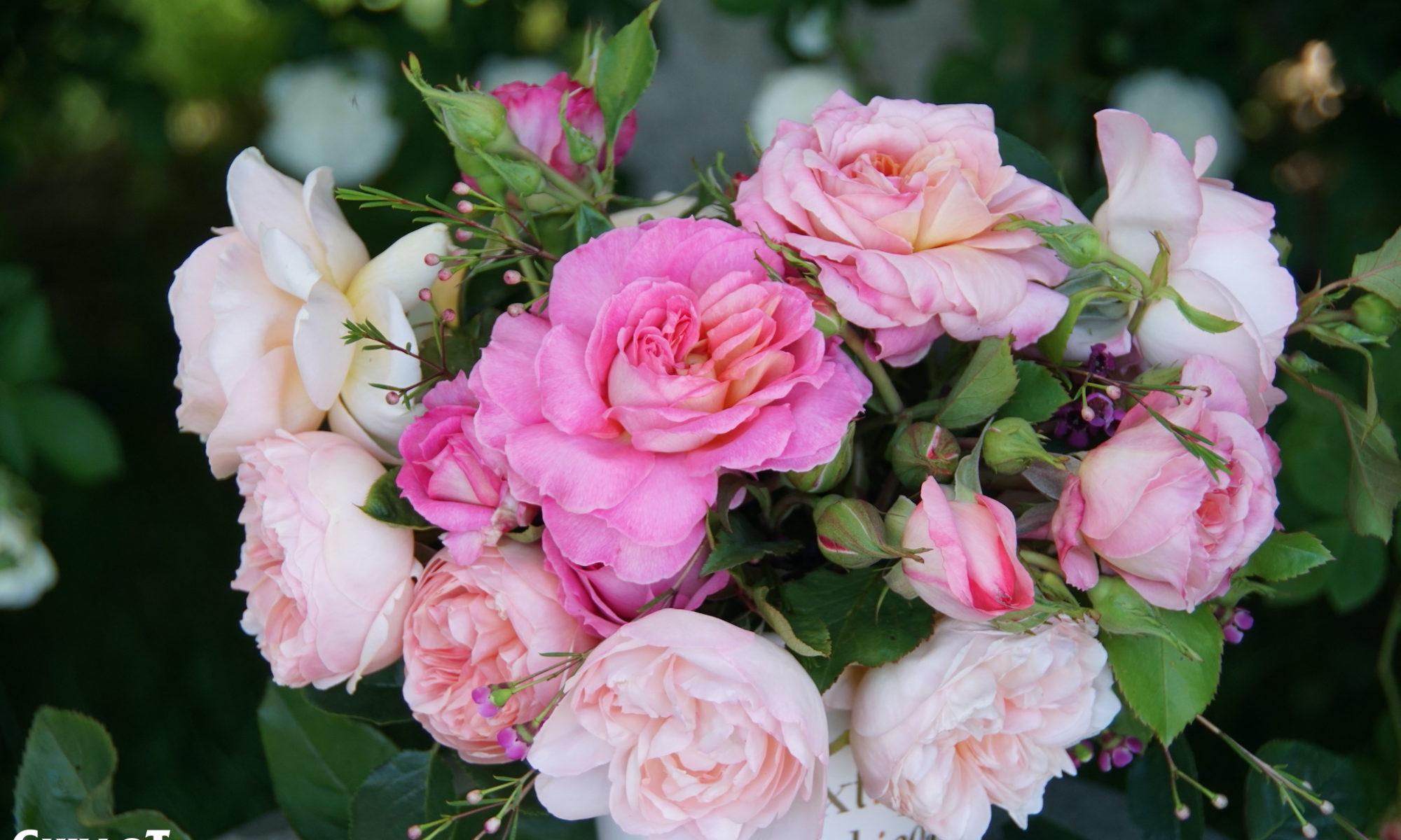 Nouveautés Roses Guillot 2021-2022