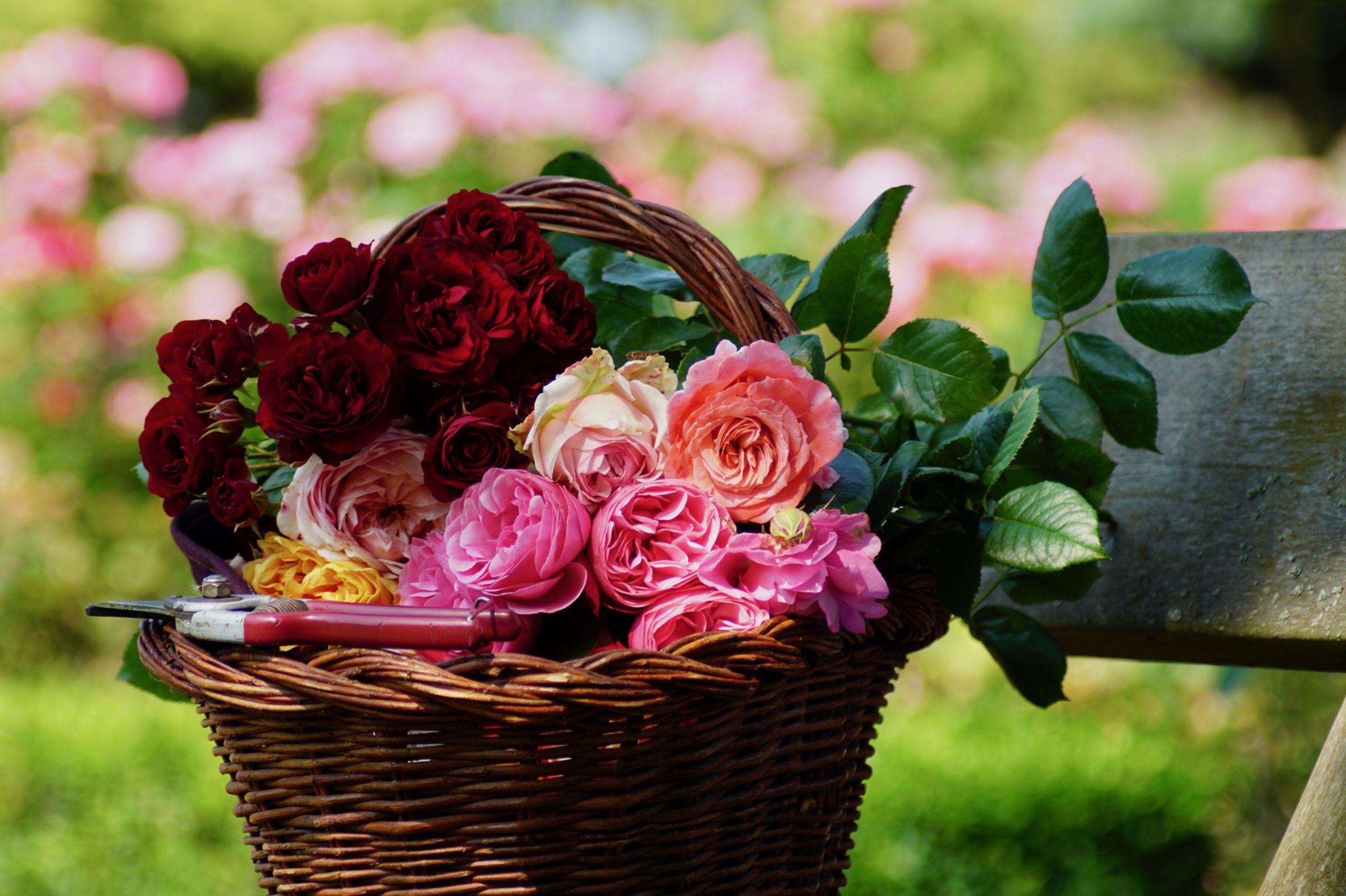 Panier aux roses - ©Roses Guillot®
