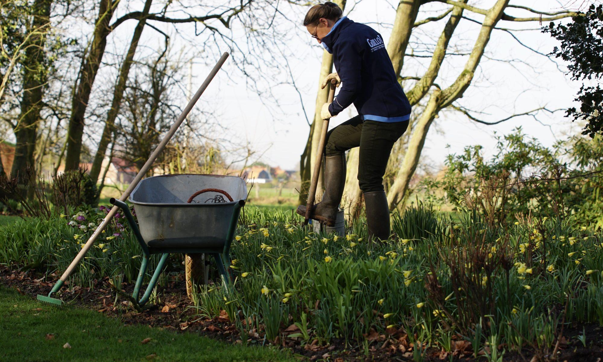 planter les rosiers racines nues à la fin de l'hier, c'est possible !