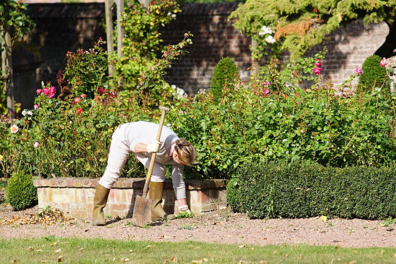 Prendre soin de son jardin Roses Guillot