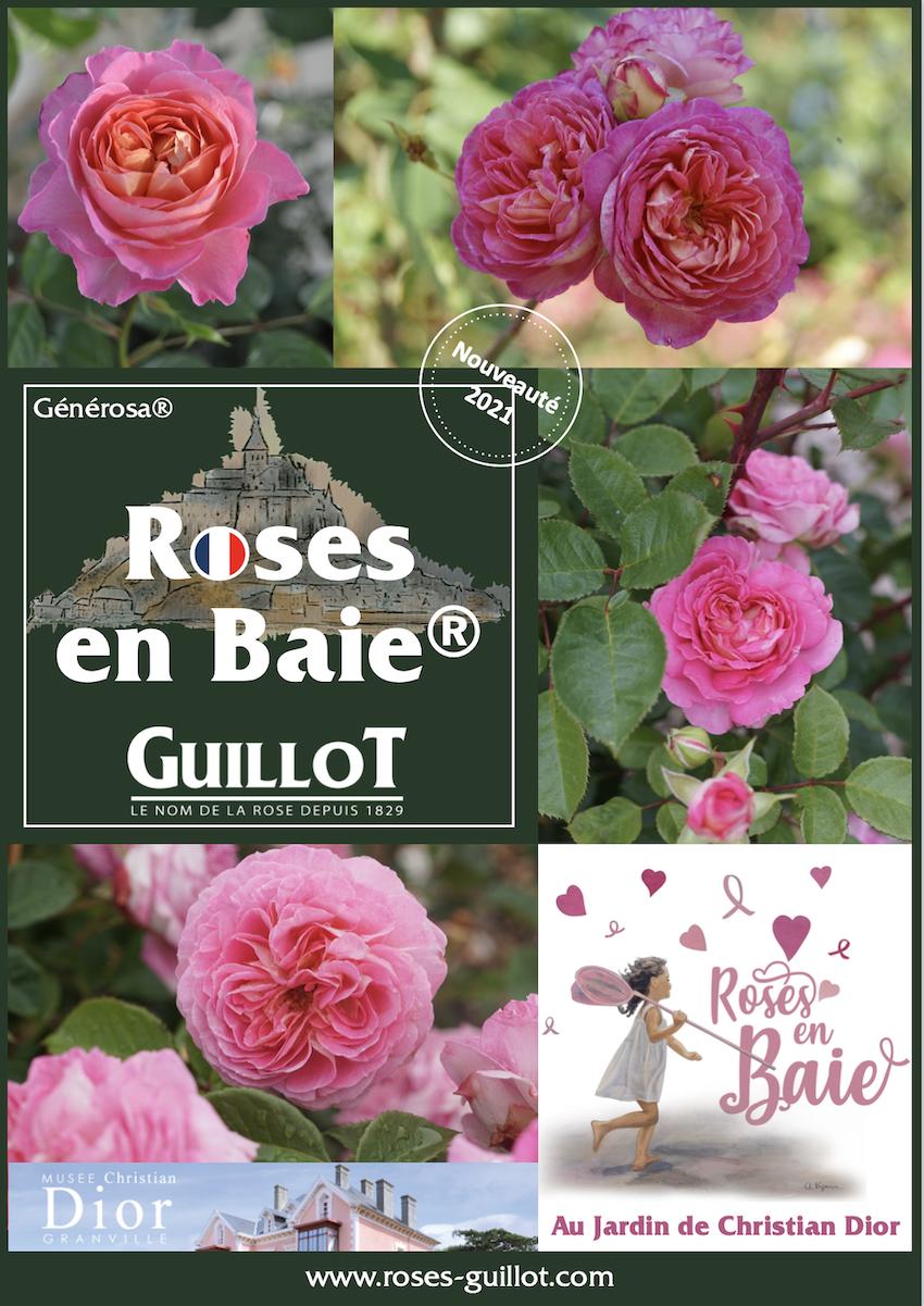 Roses en Baie, Rosier Générosa® - Roses Guillot®